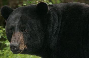 Home-Slider-bear