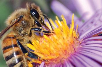 Home-Slider-bees