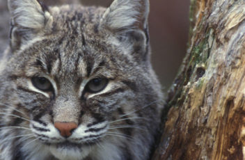Home-Slider-bobcat