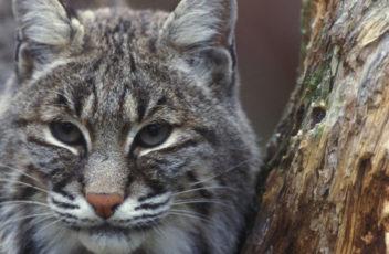 Home-Slider-bobcat