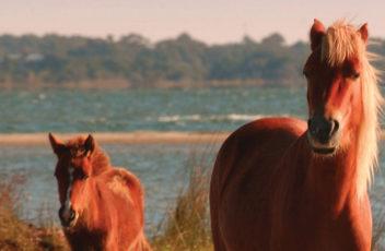 Home-Slider-wild-horses